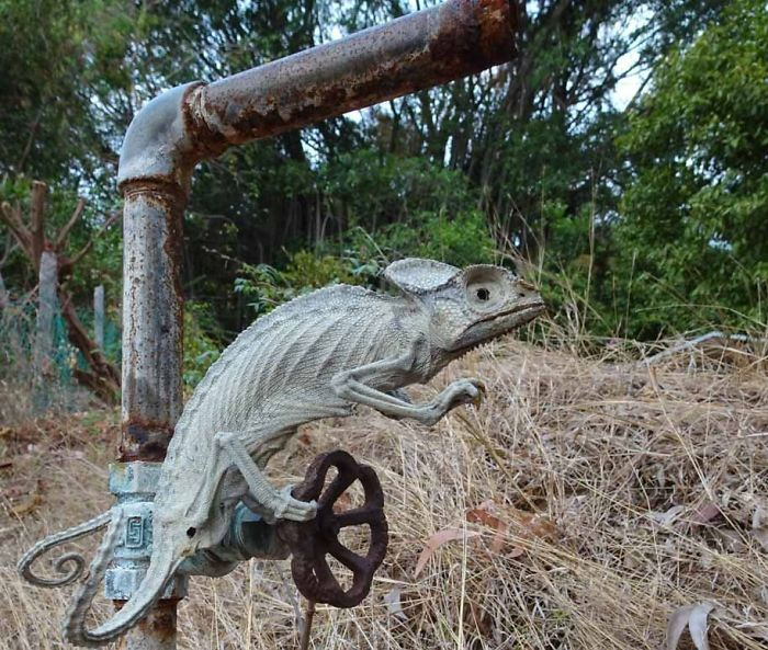 Chameleon Mummified Alive By The Tropical Sun