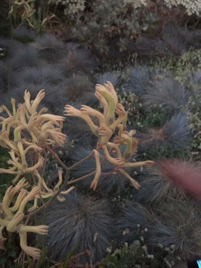 These Plants Look Like Tiny Hands