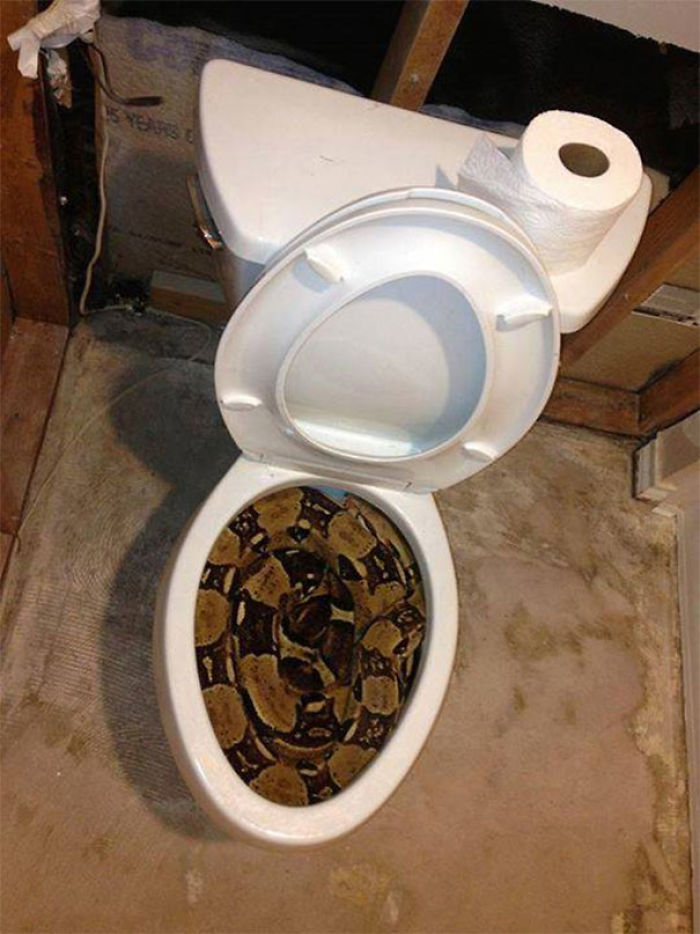This Is Why You Always Have To Check The Toilet In Australia