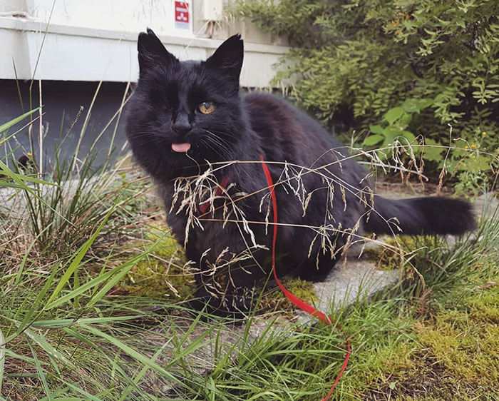 relatable-cat-comics-missangest-33