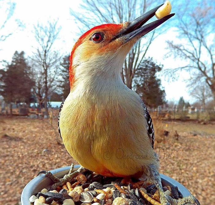 Woman Feeds Birds And Captures Stunning Close-Up Photos While Eating (New Pics)