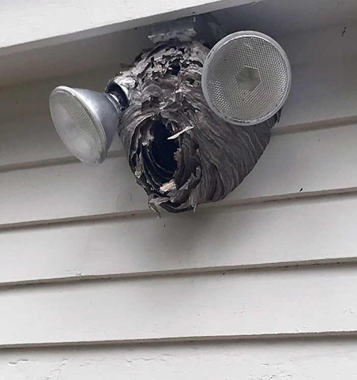 This Hornets Nest Looks Kind Of Like A Hornet's Head