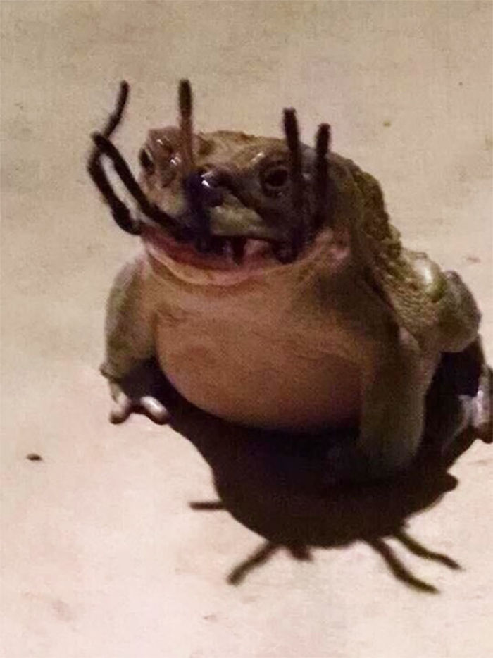 The Frog That Caught A Spider